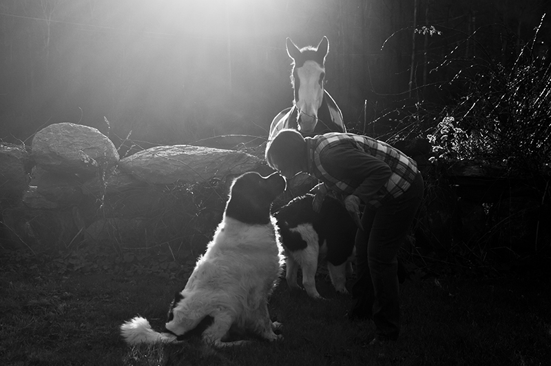 woman and Newf, nose to nose, horse, dogs, and the woman who loves them, lifestyle pet photography ©Petcha Photography | Honor Life Sessions