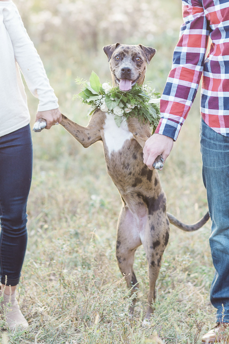 dog on back legs, couple holding paws, ©Rochelle Maples Photography | Engagement photos with dog