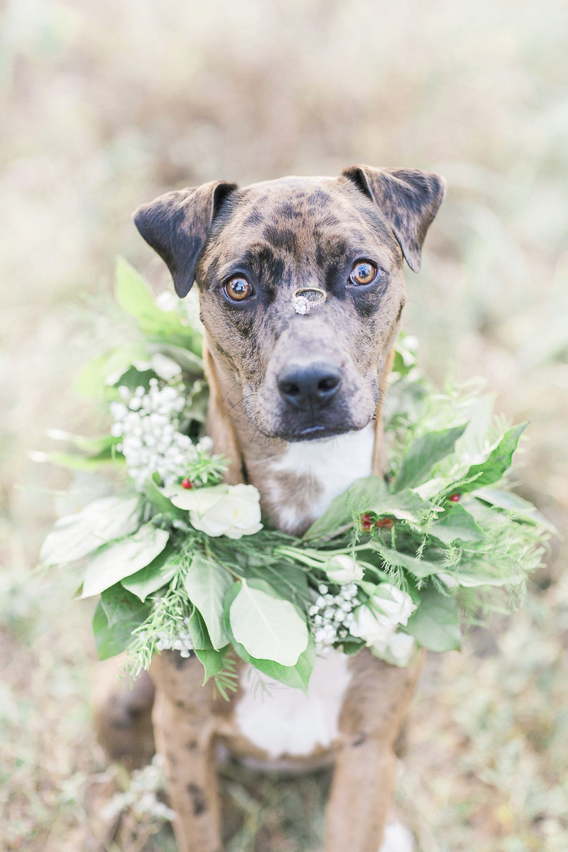 dog wearing floral wreath, and balancing engagement ring on nose, Aussie-Lab mix, ©Rochelle Maples Photography | Engagement photos with dog