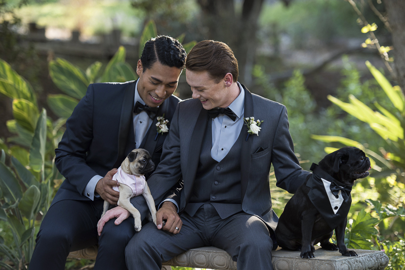 Pugs and their humans, first anniversary photos with dogs, equally wed, same sex anniversary, ©Spotlight Studios