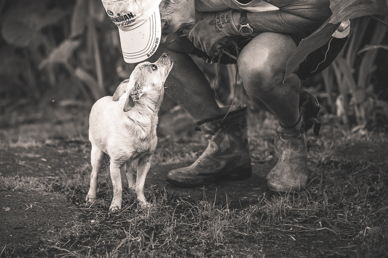 touching moment between dog and human | ©Amanda Emmes Photography | Hawaii lifestyle photographer