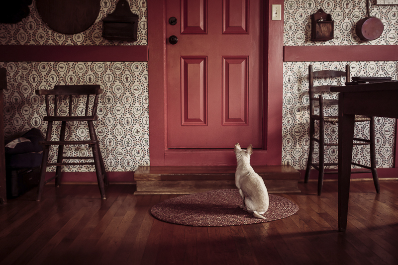 White Chihuahua waiting for red door to open, ©Amanda Emmes Photography | Oahu, Hawaii dog photography