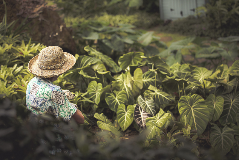 woman holding senior dog in the lush back yard, ©Amanda Emmes Photography | Oahu environmental dog portraits