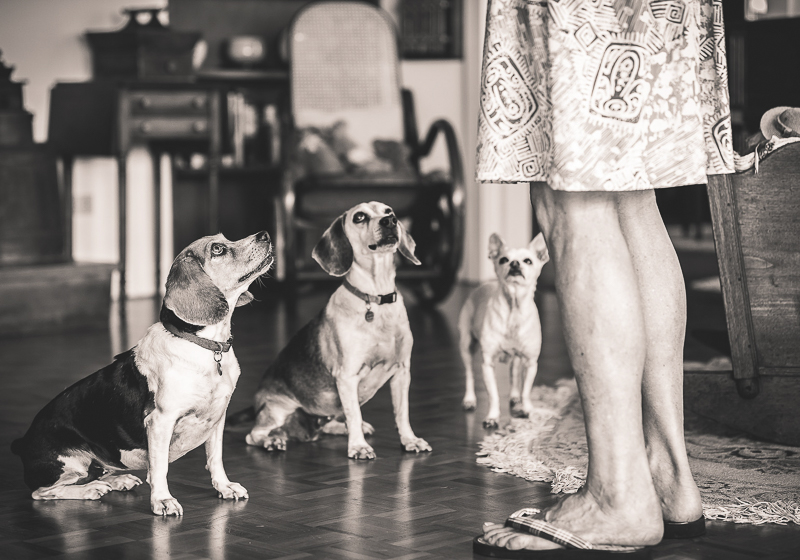 3 dogs waiting for a treat in their home, ©Amanda Emmes Photography | Maui based environmental photographer