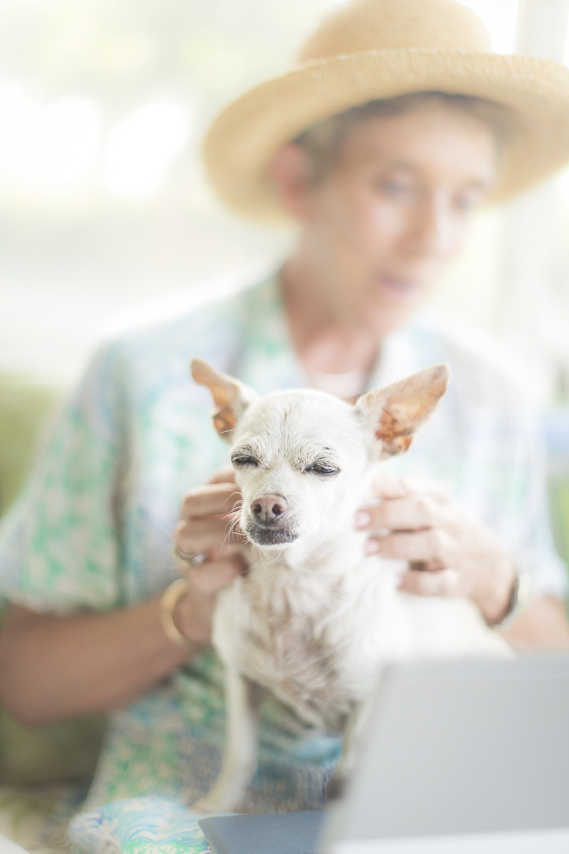 woman giving senior Chi a neck rub, bond between dogs and people, ©Amanda Emmes Photography | Oahu, Hawaii dog photography