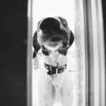 Happy Tails: Daisy the Hilarious GSP