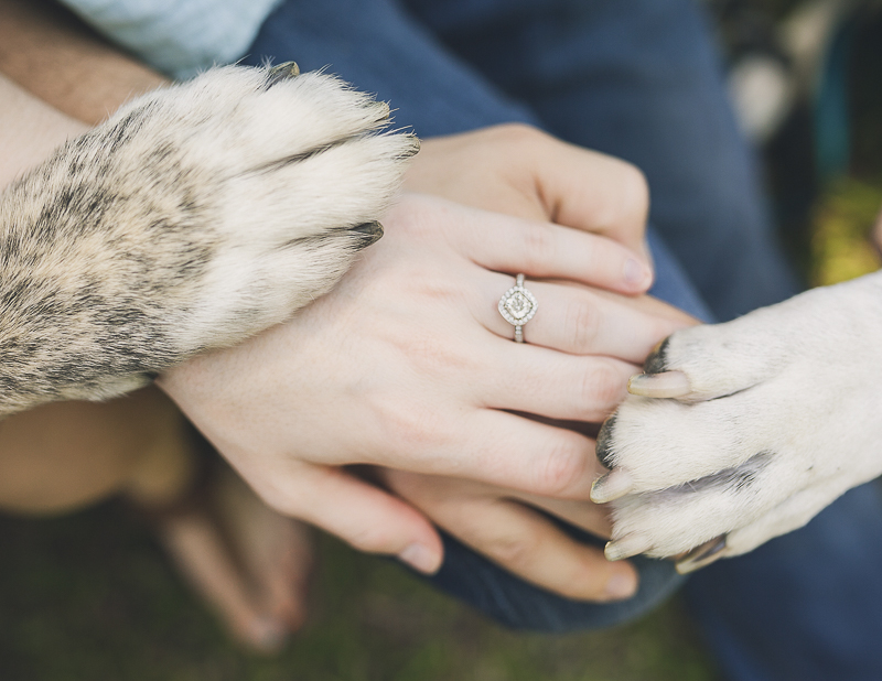 two dogs, paws and hands engagement photos