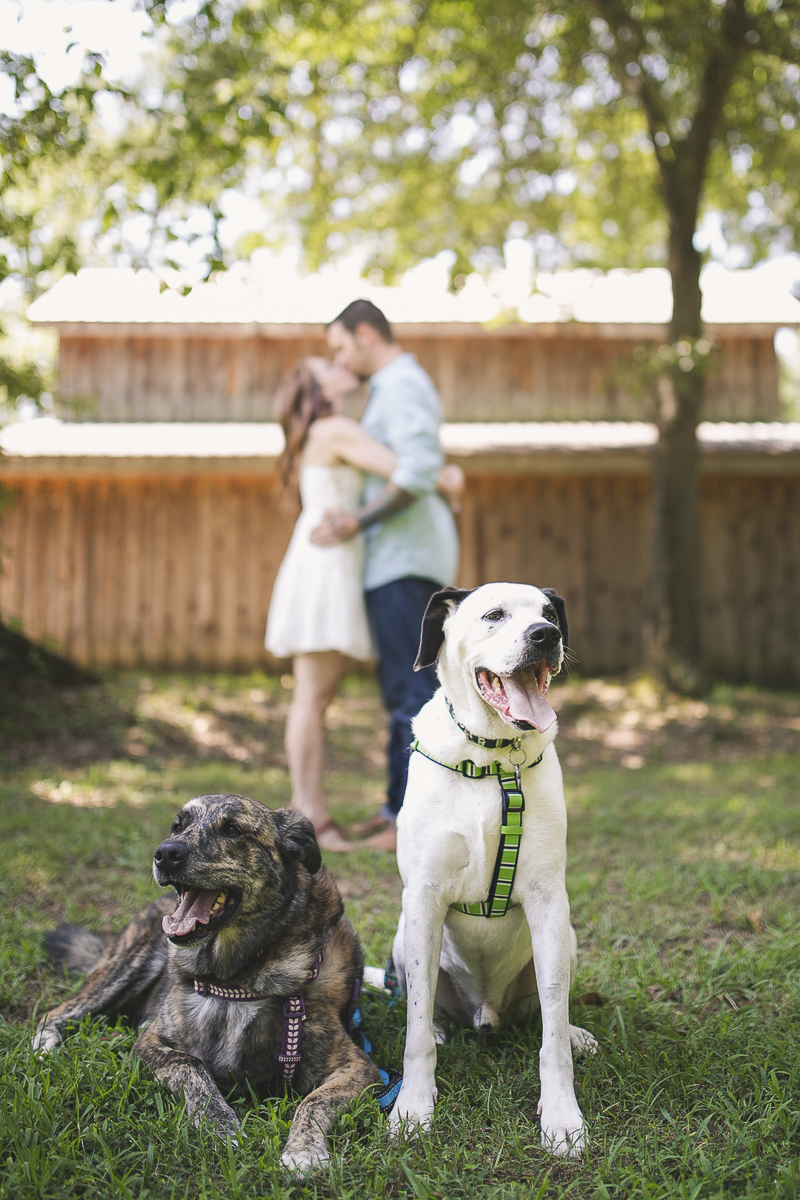 mixed breed dogs on grass with engaged couple in background | ©Brandy Angel Photography | engagement pictures with dogs