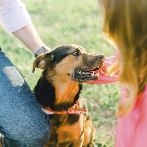 Engaging Tails:  Mister the Charming Mixed Breed