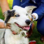 Best Dog:  Opal the Border Collie-Aussie Mix