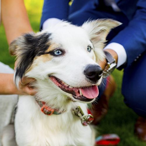 Best Dog:  Opal the Border Collie-Australian Shepherd Mix