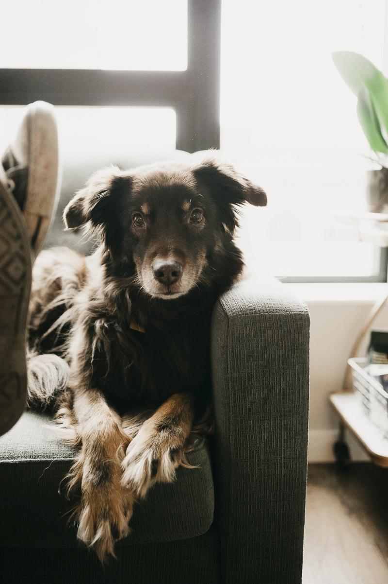 Aussie mix, ©Empiria Studios | lifestyle dog photography