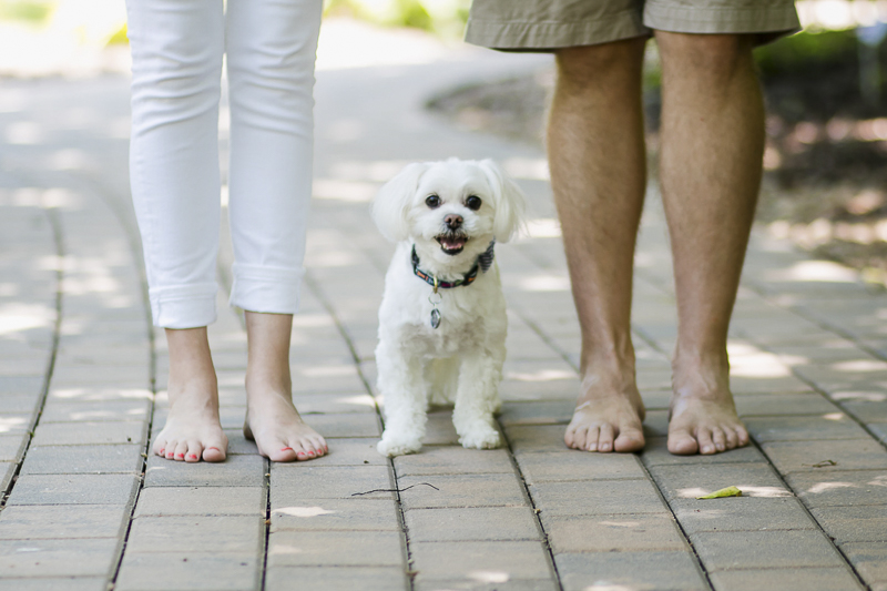 Maltese standing between couple, anniversary photos with a dog, ©Images by Amber Robinson. Raleigh, NC