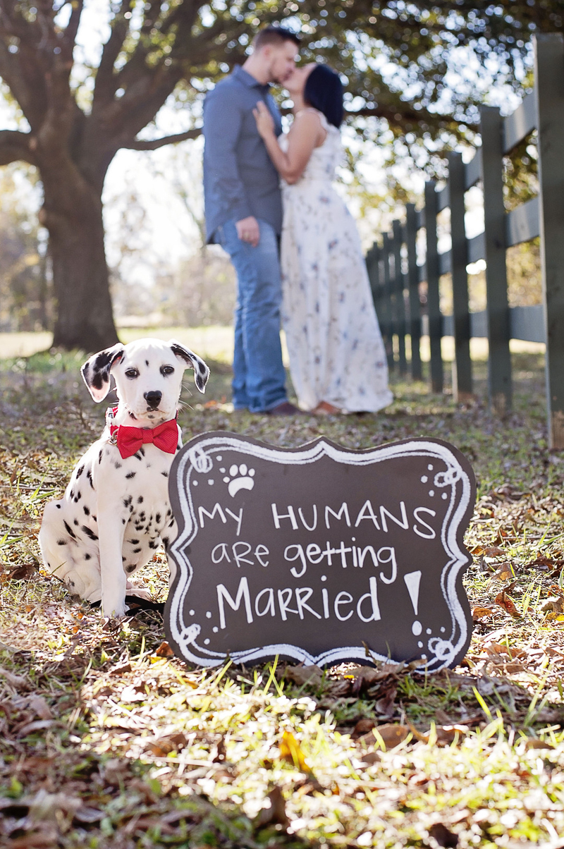Dalmatian puppy and Save the Date Sign, Houston Texas engagement photos | ©Kelly Urban Photography