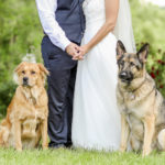 Best (Wedding) Dogs:  Roman and Ryah