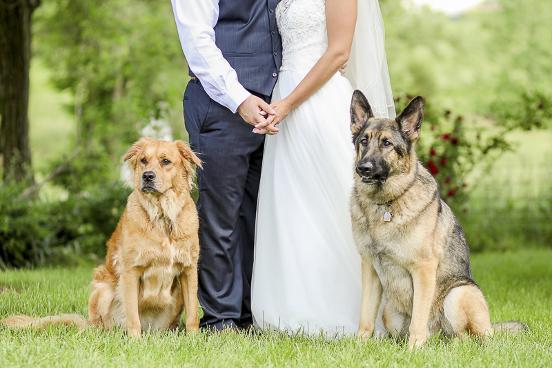 Pet friendly wedding | dogs and bride and groom, ©Shelby Chante' Photography