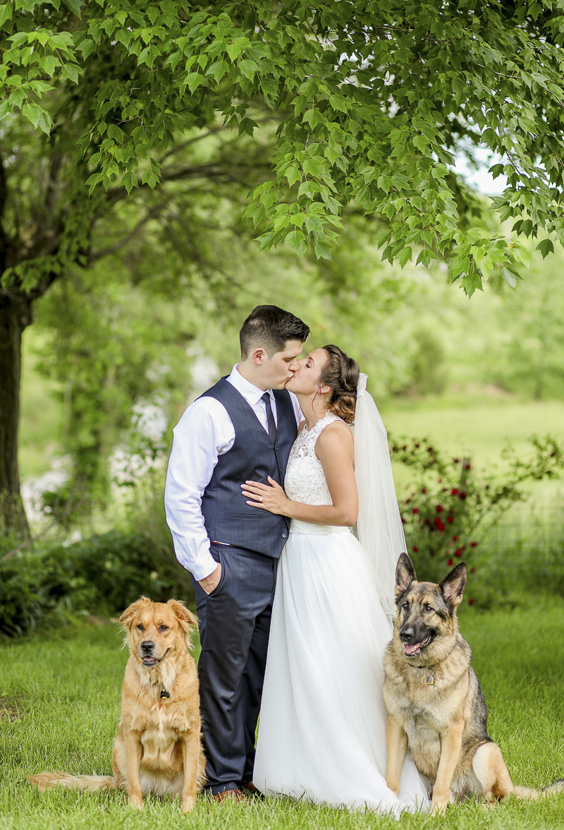 bride, groom kissing with dogs next to them, Ava, MO | ©Shelby Chante' Photography