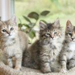Caturday:  Fostering Kittens