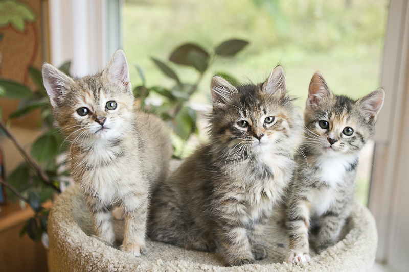 Foster kittens | ©Mandy Whitley Photography | Nashville lifestyle cat photographer