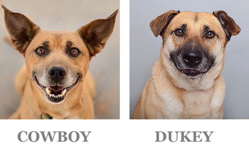 adoptable dogs | Best Friends Animal Sanctuary