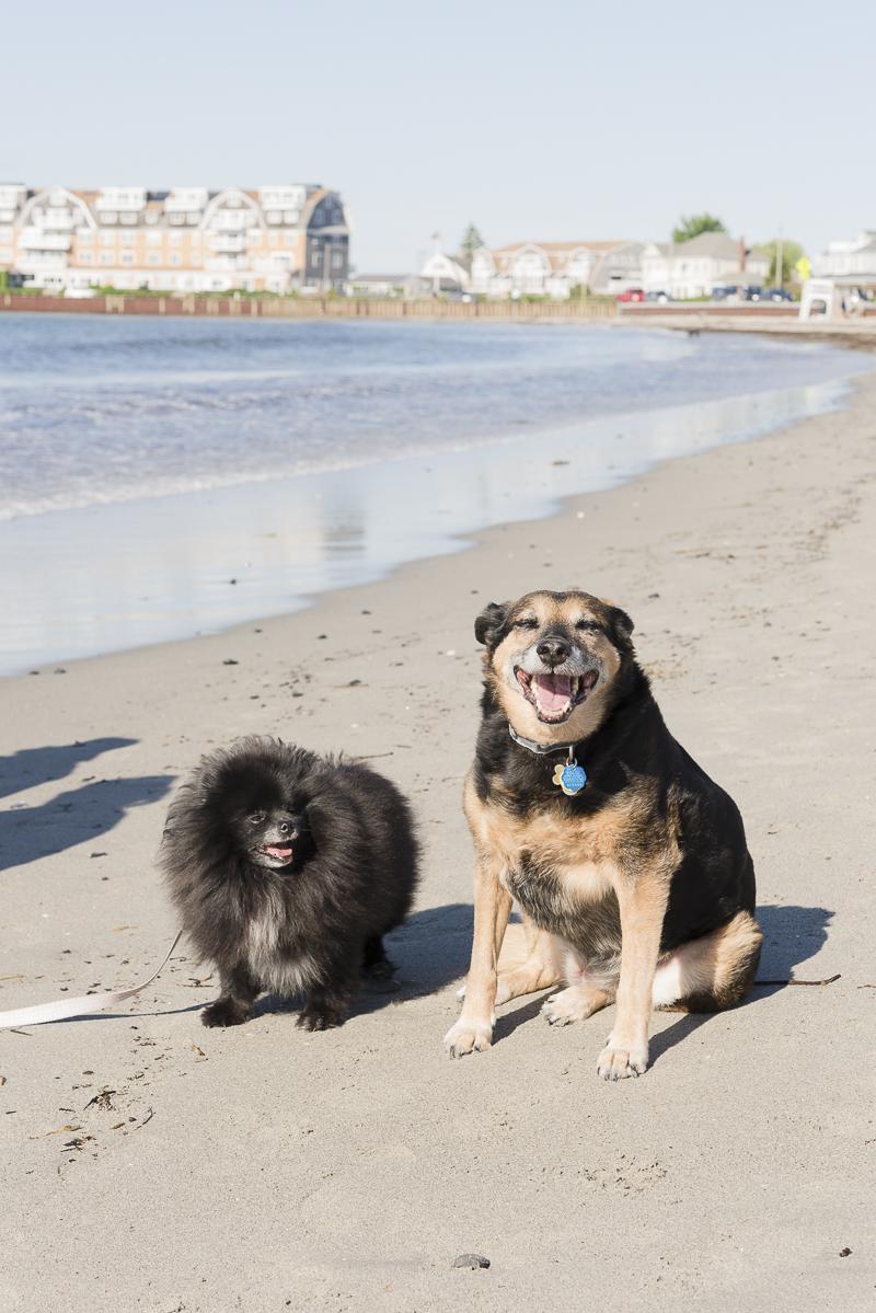 dog friendly beach, Kennebunk, Maine, lifestyle dog photographer ©Alice G Patterson Photography