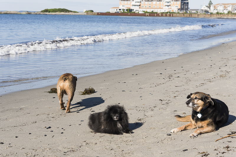 dog friendly beach, ©Alice G Patterson Photography | Kennebunk, Maine, lifestyle dog photographer