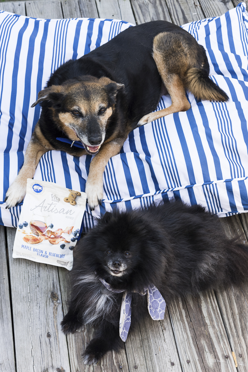 ©Alice G Patterson Photography | Kennebunk, Maine, lifestyle dog photographer
