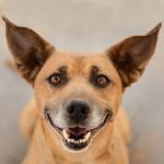 Adopt Me:  National Mutt Day