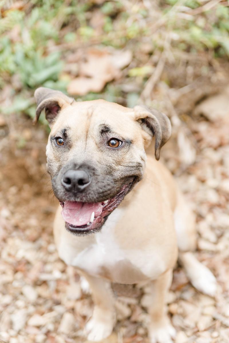 Adorable mixed breed dog, Stella, ©Heather K Cook Photography   Atlanta lifestyle dog photography