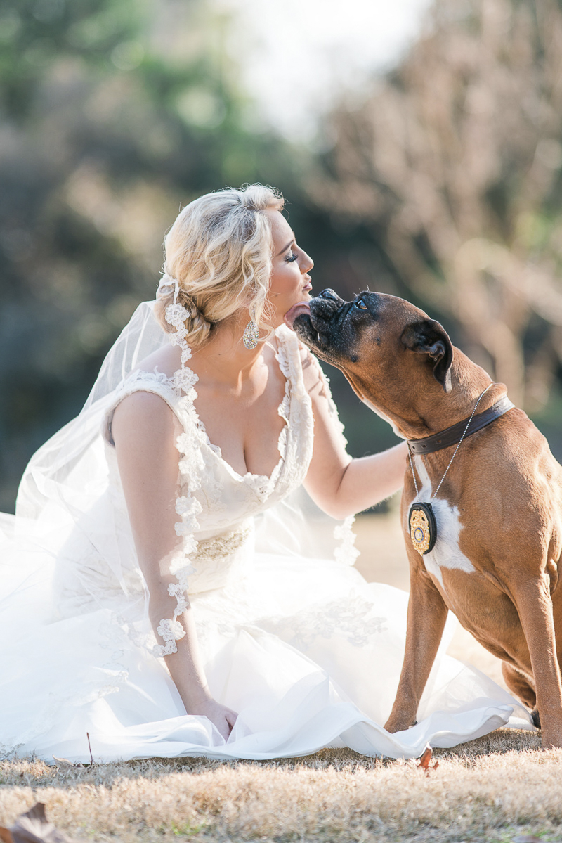Dog licking bride's face, bridal portraits with a Boxer, ©Sugar Peach Productions | dog friendly bridal photos