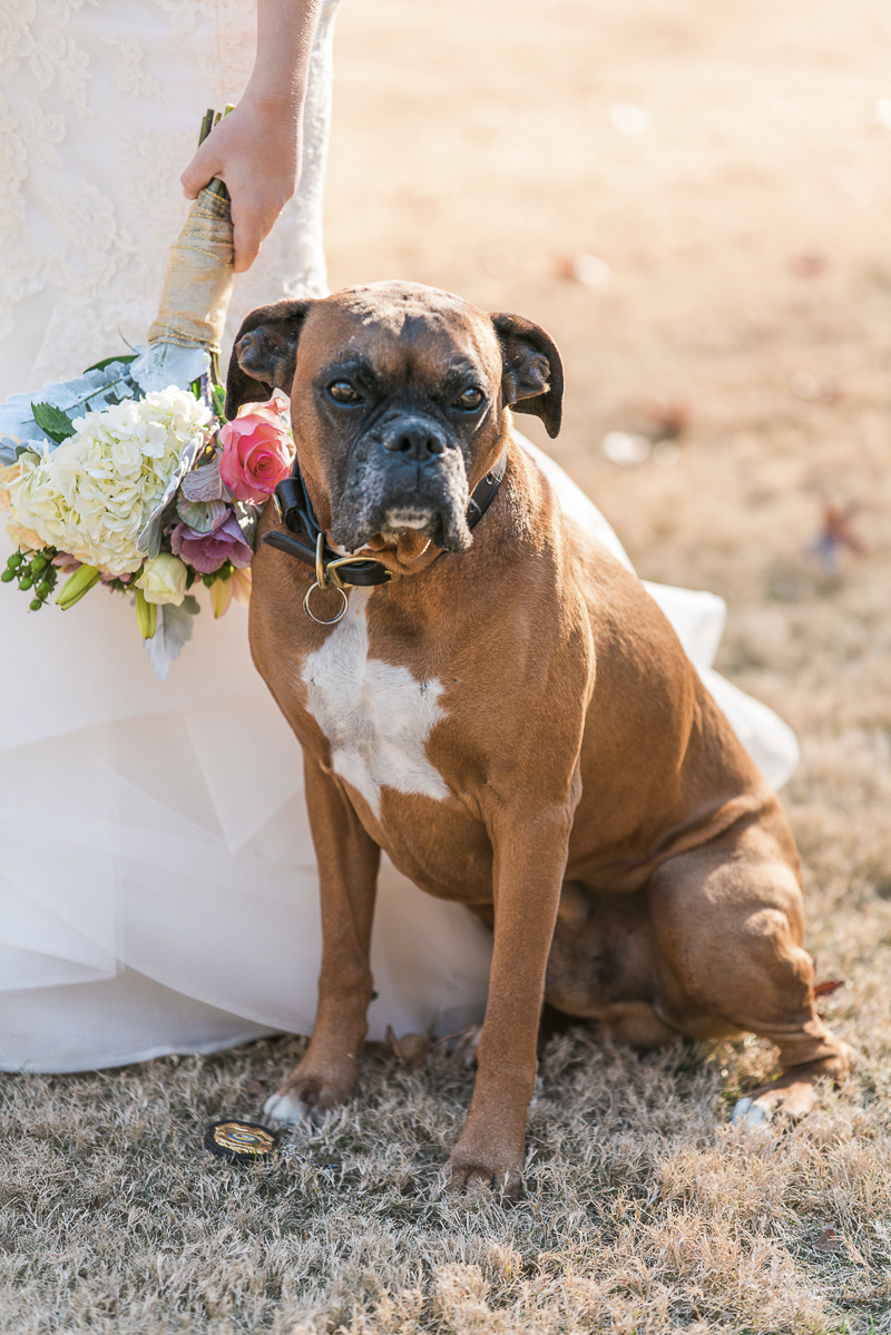 dog and bride, dog friendly bridal session, ©Sugar Peach Productions