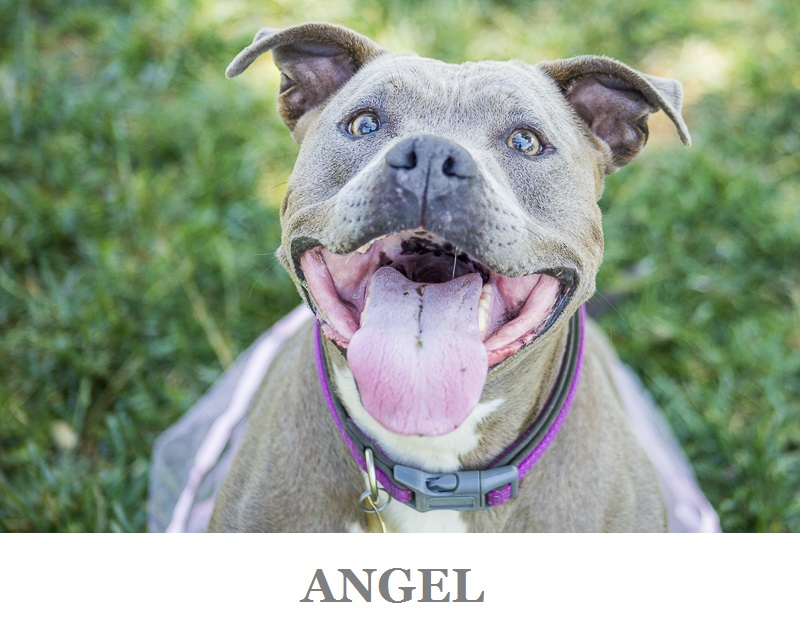 Adoptable dogs from C.A.R.L. ©Kiernan Michelle Photography