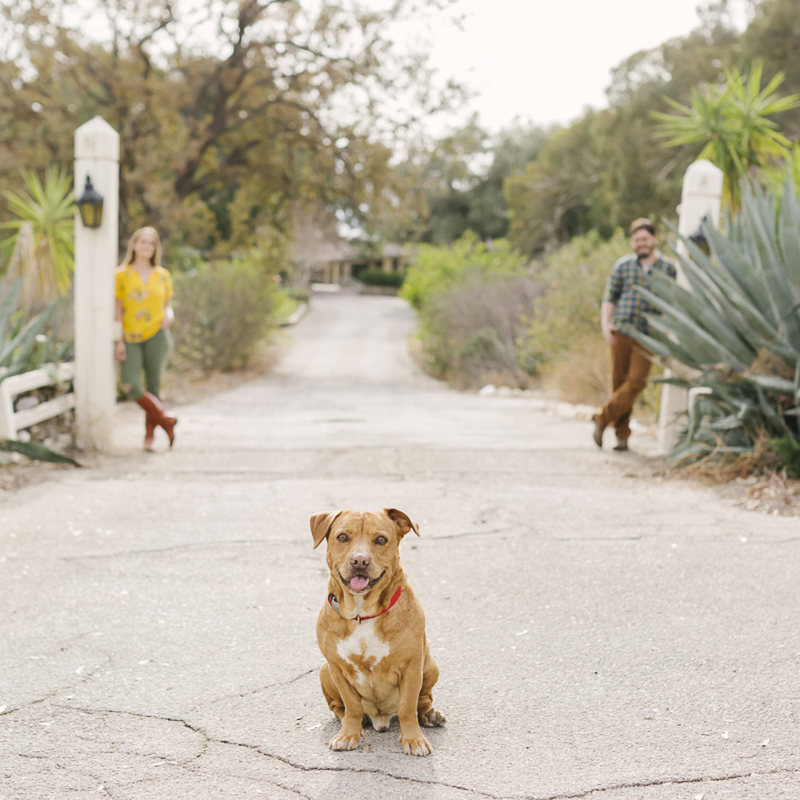 Dog friendly engagement session, Calabasas, CA ©Aurelia D'Amore Photography | ideas for engagement photos for dogs