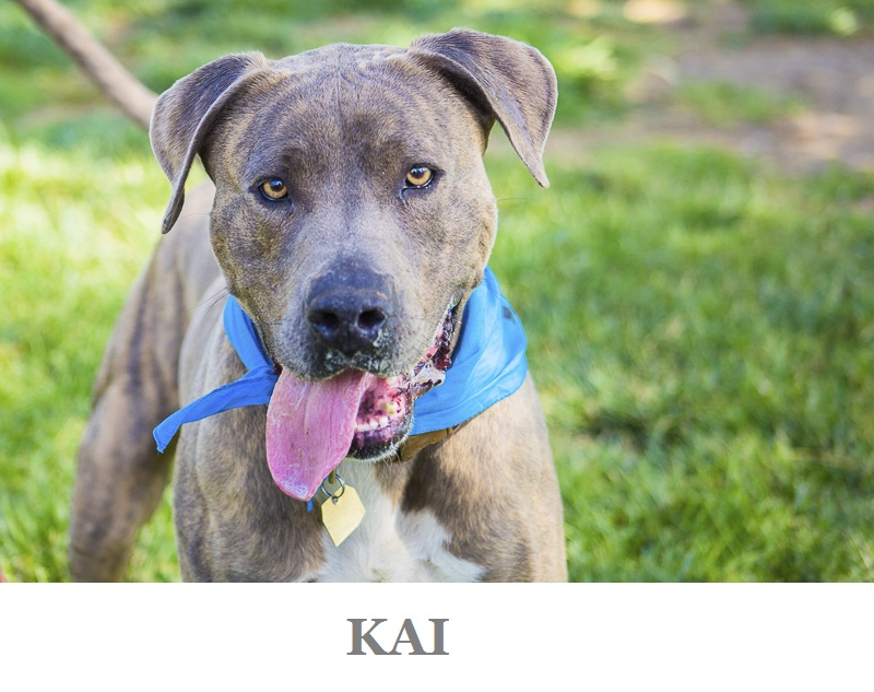 Handsome Adoptable Kai from C.A.R.L. | ©Kiernan Michelle Photography