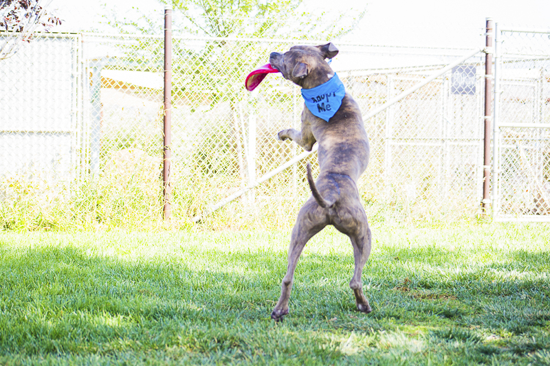 dog catching frisbee     Adoptable dogs from C.A.R.L. ©Kiernan Michelle Photography