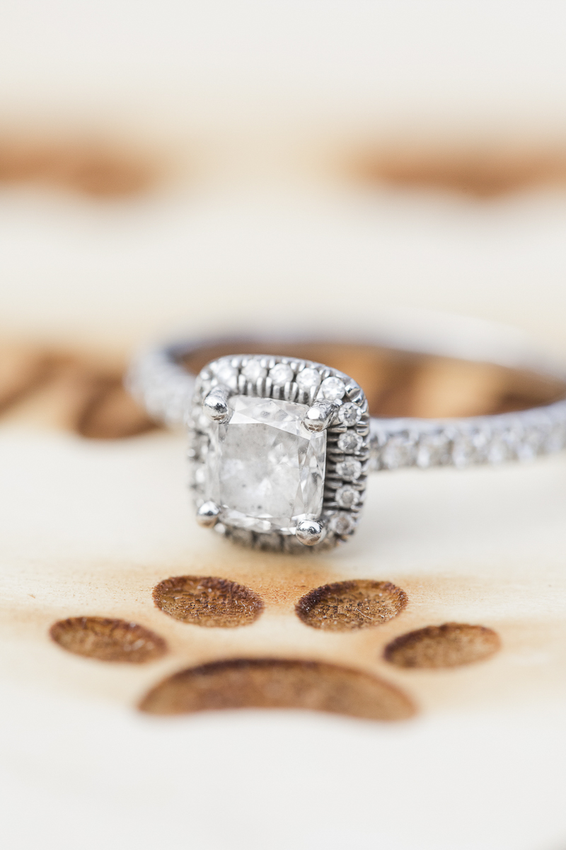 dog friendly engagement session, ring shot on pawprint, save the date sign ©Limelight Entertainment Photography