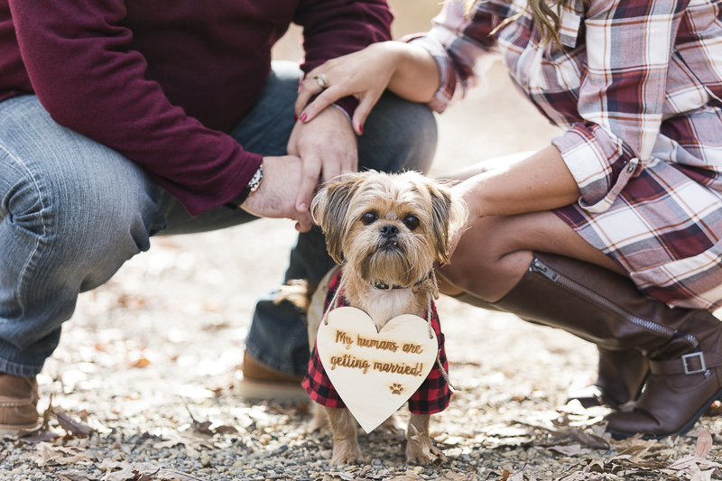 """Adorable Maltese Mix wearing """"my humans are getting married"""" sign 