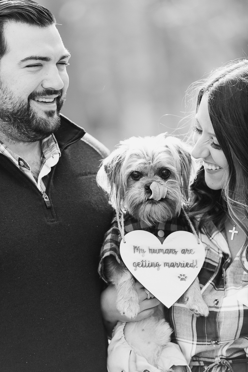 well dressed dog licking his nose, including dog in engagement portraits | ©Limelight Entertainment Photography