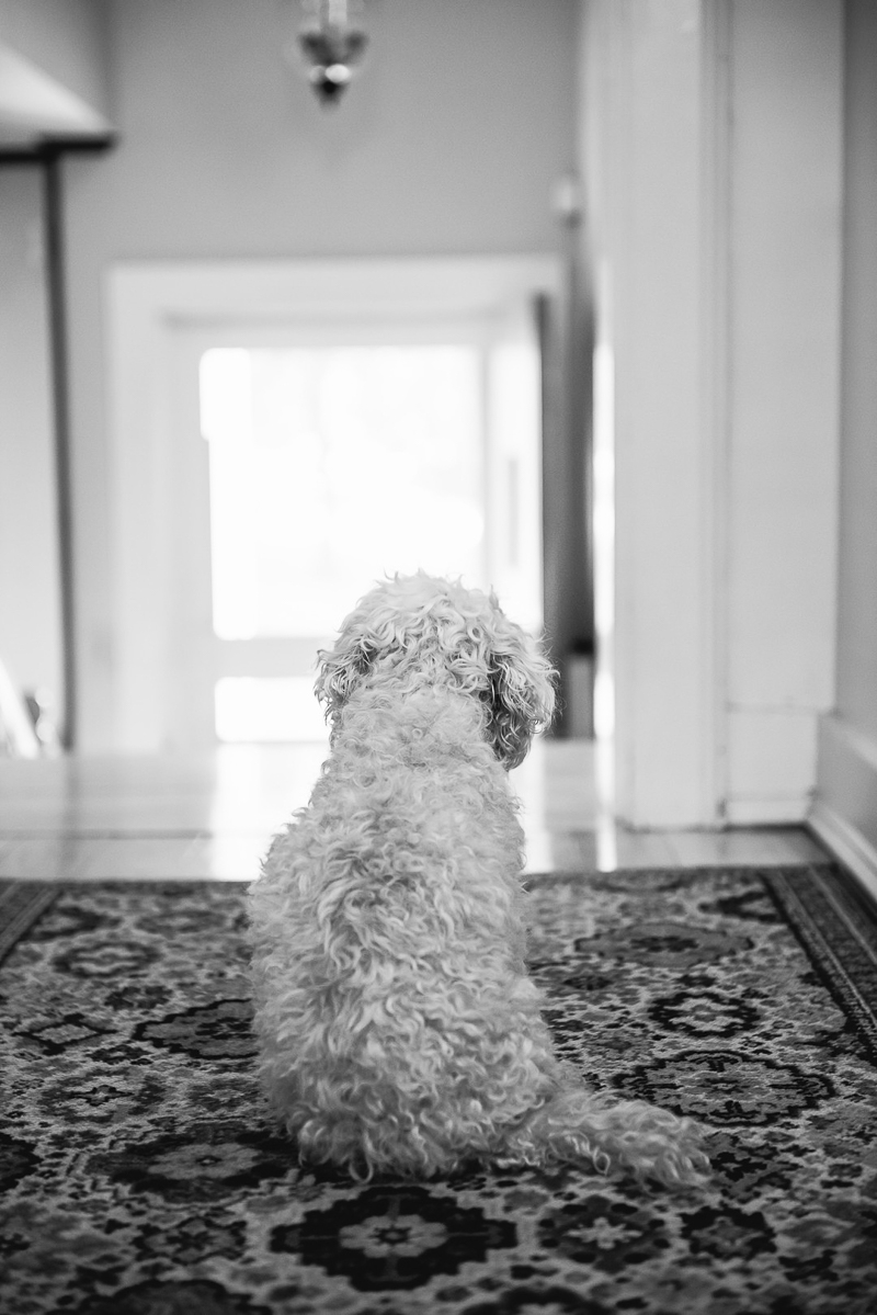 sweet senior dog looking at staircase | ©Mei Lin Barral Photography Vermont lifestyle dog photography