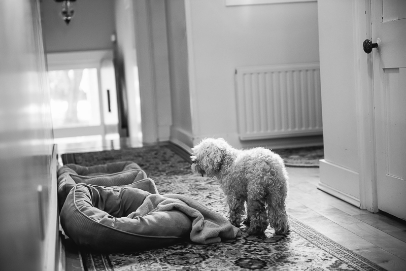 dog and beds in hallway |©Mei Lin Barral Photography Vermont lifestyle dog photography