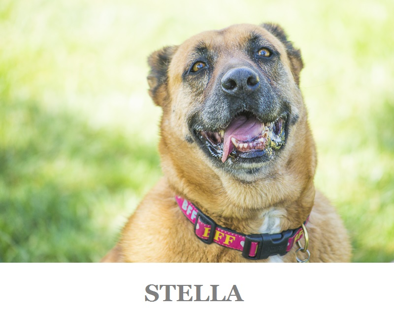 Adoptable dog from C.A.R.L.