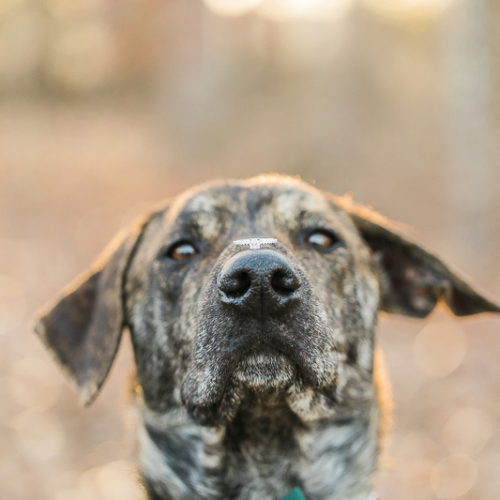 Engaging Tails:  Quinn the Handsome Dog