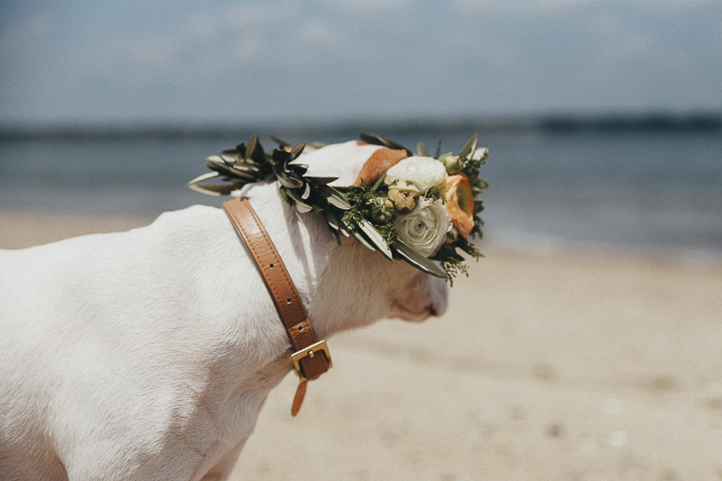 puppy wearing floral crown at the beach