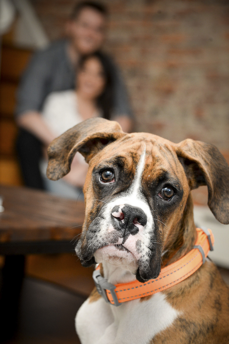 Boxer puppy and her humans, creative ways to include dogs in engagement photos ©The Photo People | Philadelphia lifestyle dog photography