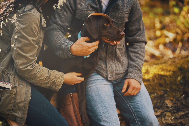 Engagement photos with chocolate lab puppy ©Lavender Bouquet Photography | dog friendly engagement portraits