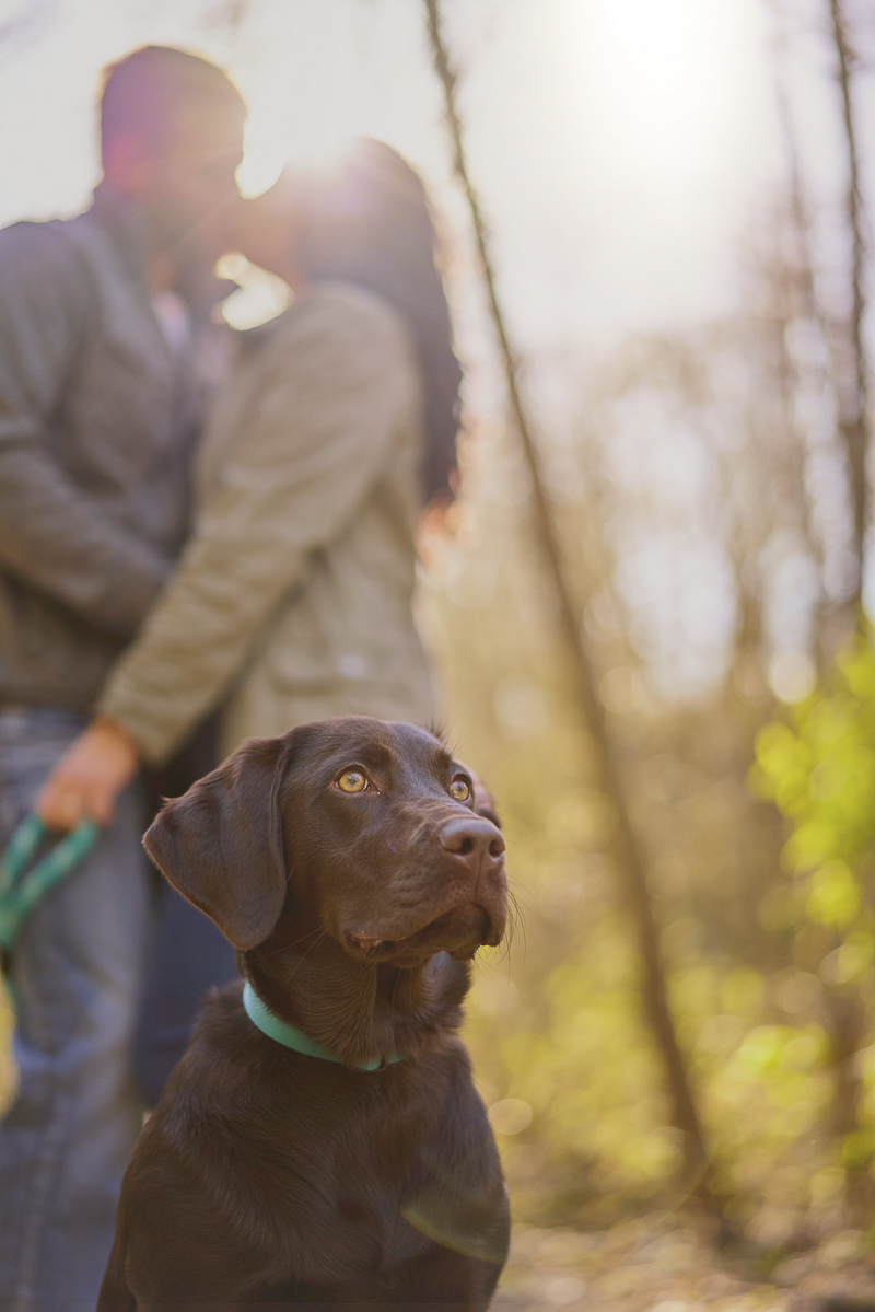 beautiful Lab puppy with couple in background ©Lavender Bouquet Photography | dog friendly engagement photos
