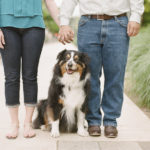 Bentley the Australian Shepherd in Dallas, Texas