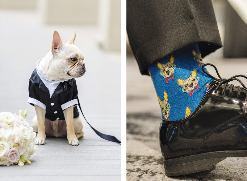 Frenchie wearing tux, socks with French Bulldog, ©epagaFoto | Kansas City, MO dog-friendly wedding