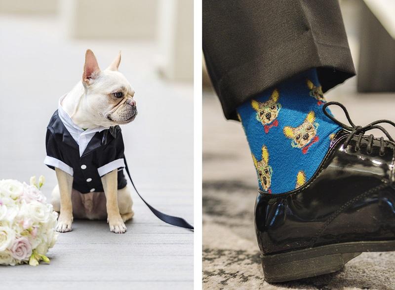 Frenchie wearing tux, socks with French Bulldog, ©epagaFoto | Kansas City, MO dog-friendly wedding