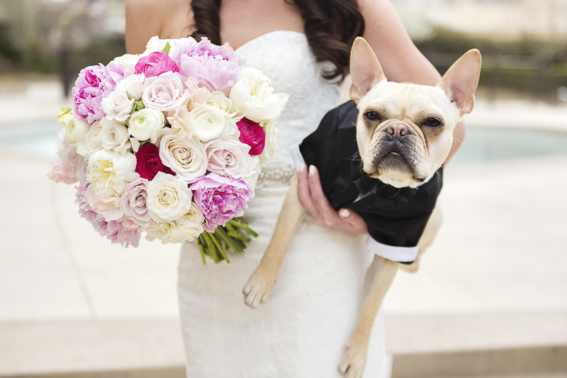 bride and French Bulldog, ©epagaFoto | Kansas City, MO dog-friendly wedding